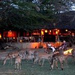 0028_Satao_Camp__Surrounding_and_views_from_the_camp___JPG_960x2000_q85-150x150