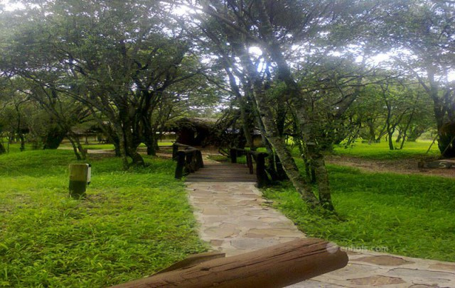 Kimana-camp-path-to-the-tents